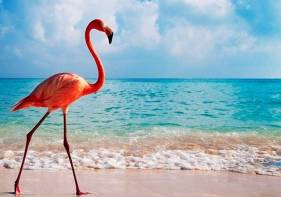 flamingo-beach-arouba